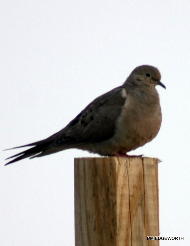 A SIGN OF PEACE ..DOVE